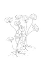 Dermyn - Curcuma longa - fungerar som en stark antioxidant